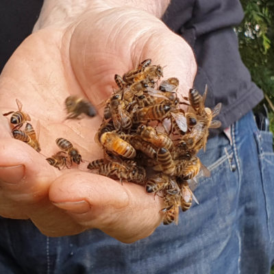 big abeilles